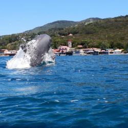 Keila Deshaies Guadeloupe, un voilier et parfois des rencontres